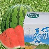 JA全農長野 南原ファームスイカ-信州の夏休み-匠- 贈答用中玉(約7-9kg)