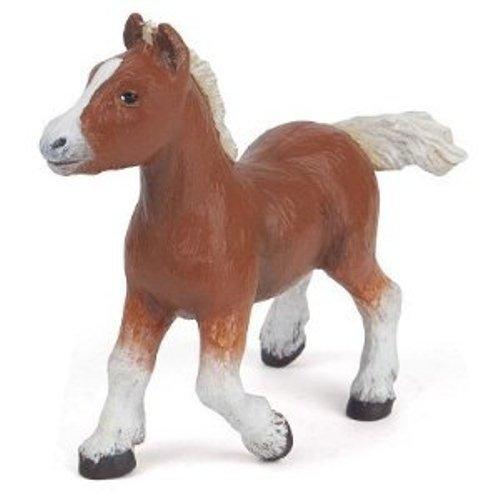 Bay Shetland Foal