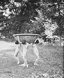 1915 dance nude Florence Noyes dancers Black & White Vintage photo l501