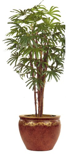 7ft RAPHIS PALM TREE/2pc