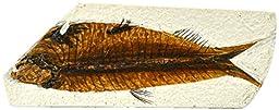4x10cm Fish Fossil Replica, Mesozoic