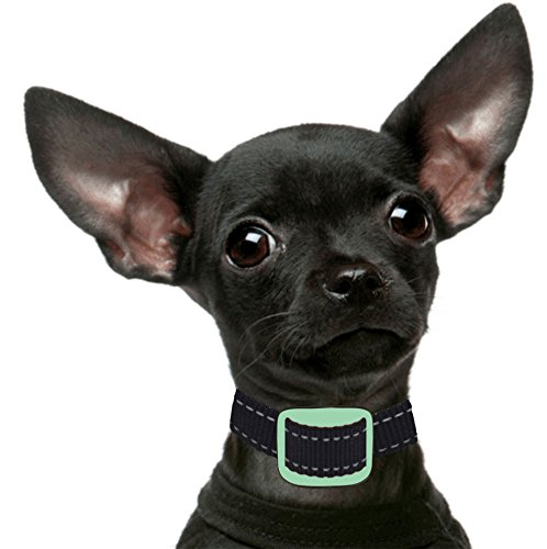 'NEW MODEL' Our K9 Mint Small Dog No Bark Collar - Anti Bark Vibration Control - 7 Levels Button Adjustable Sensitivity Control - Warning Beep Then Vibration for 6 - 30 lb. Dogs - Low Battery Alarm
