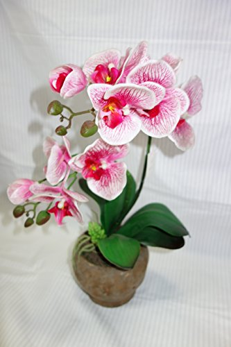 orchid partners Toronto, sept 24, 2014 /cnw/ - orchid capital partners corp, an ontario corporation 100% owned by robert w c becher, announces that it has acquired beneficial ownership of 1,000,000 common shares of everfront ventures corp (everfront) through an acquisition in the public market at a price per.