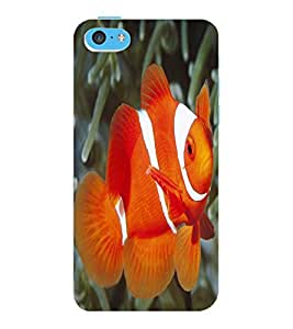 ColourCraft Gold Fish Design Back Case Cover for APPLE IPHONE 5C