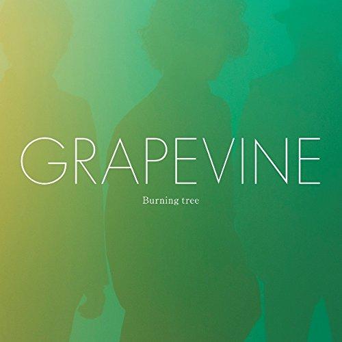Burning tree (通常盤) - GRAPEVINE