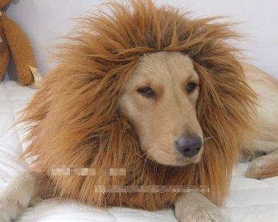 大変身!! 犬 用 ライオン コスプレ グッズ かわいい おしゃれ ペット 着ぐるみ コスチューム かつら ペット用タオル セット -
