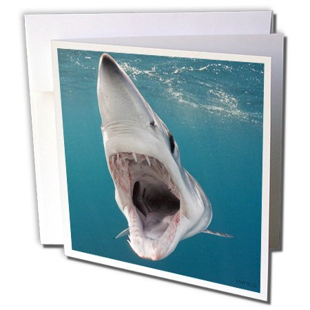 Gc_46335_1 Vwpics Sharks - Shortfin Mako Shark With Open Mouth, Isurus Oxyrinchus, San Diego, California, Usa, Eastern Pacific - Greeting Cards-6 Greeting Cards With Envelopes back-389026