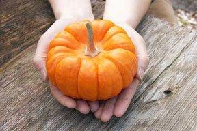 Renee's Garden Seeds - Baby Pumpkins - Mini Jack