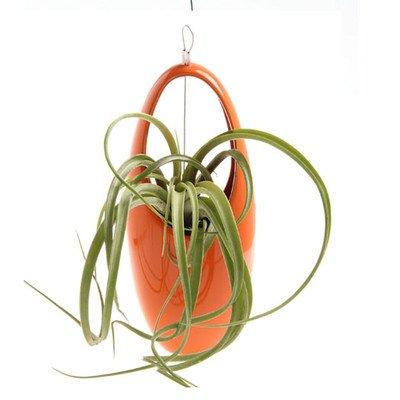 vase-a-suspendre-oeufs-aerium-couleur-orange