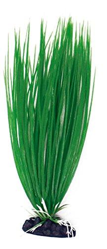 wave-acorus-plante-classique-pour-aquariophilie-taille-l