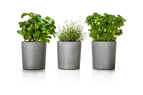 krautertopf-set-spicepot-von-urbanature-3-ubertopfe-aus-beton-fur-frische-krauter-und-pflanzen-fur-a