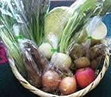 お試し 野菜セット 10種類 有機肥料、農薬・化学肥料不使用の野菜