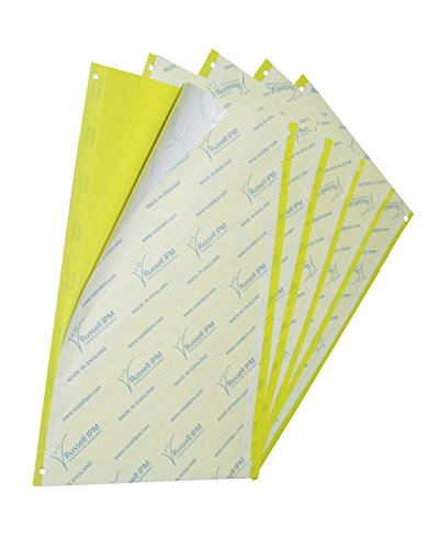 russell-ipm-greenhouse-yellow-sticky-trap-for-flying-insects-medium-x-10