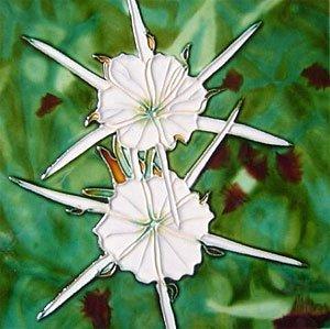 Amazon White Spider Lillies Flowers Decorative