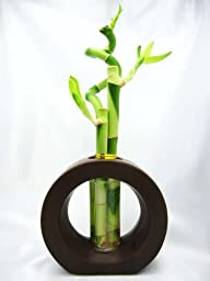 9GreenBox – Live Spiral 3 Style Lucky Bamboo Plant Arrangement with Ceramic Vase Brown