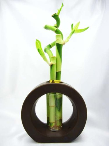 Where To Buy Bamboo Plants Indoor And Outdoor Infobarrel