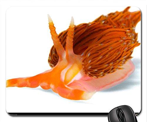 godiva-nudibranchia-mouse-pad-mousepad