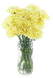 Cut Flowers - Carnation Yellow