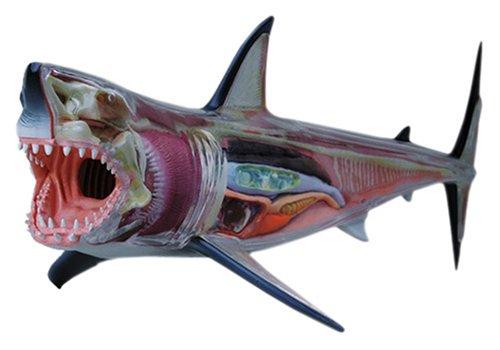 スカイネット 立体パズル 4D VISION 動物解剖 No.02 ホオジロ鮫解剖モデル