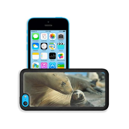 Fur Seals Baby Care Tenderness Apple Iphone 5C Snap Cover Premium Leather Design Back Plate Case Customized Made To Order Support Ready 5 Inch (126Mm) X 2 3/8 Inch (61Mm) X 3/8 Inch (10Mm) Liil Iphone_5C Professional Case Touch Accessories Graphic Covers front-737767