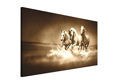bild von einem pferd was. Black Bedroom Furniture Sets. Home Design Ideas
