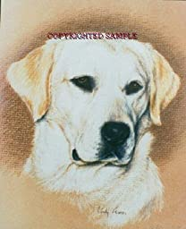 Labrador Retriever - Portrait by Cindy Farmer, Yellow
