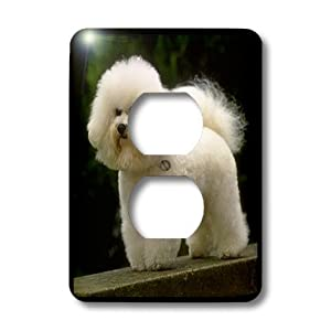 lsp_402_6 Dogs Bichon Frise - Bichon Frise - Light Switch Covers - 2 plug outlet cover