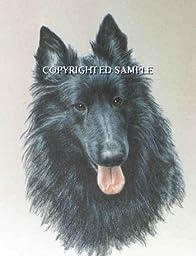 Belgian Sheepdog - Portrait by Cindy Farmer