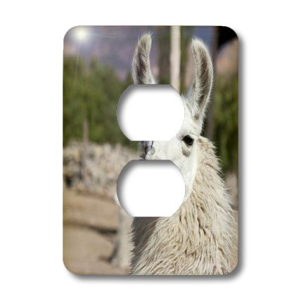 Lsp_85273_6 Danita Delimont - Llamas - Argentina, Jujuy, Llama Herd - Sa01 Jri0097 - Jutta Riegel - Light Switch Covers - 2 Plug Outlet Cover