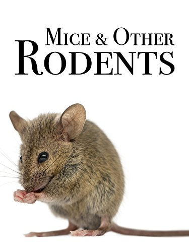 Mice & Other Rodents on Amazon Prime Video UK