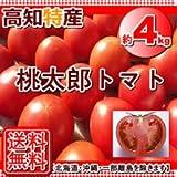 高知・愛媛産・桃太郎トマト約3.5k~4kg入り
