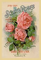 Paper poster printed on 20 x 30 stock. Scott\'s Roses and Other Beautiful Flowers