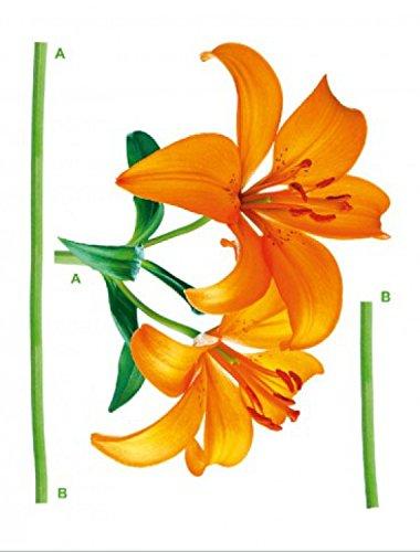 fiori-giglia-orange-sticker-adesivo-da-parete-85-x-65cm
