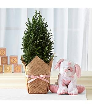 Deluxe Growing Tree For Baby Girl Deluxe Growing Tree For Baby
