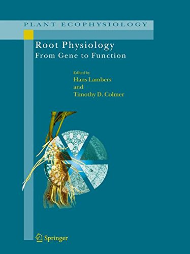 Root Physiology: from Gene to Function (Plant Ecophysiology)