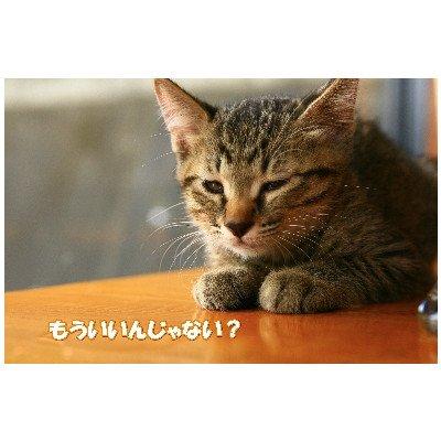 ポストカード文字入り「もういいんじゃない?」猫の絵えはがき絵葉書postcard-