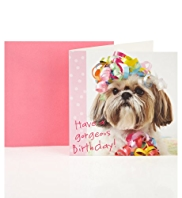 Gorgeous Dog Birthday Greetings Card