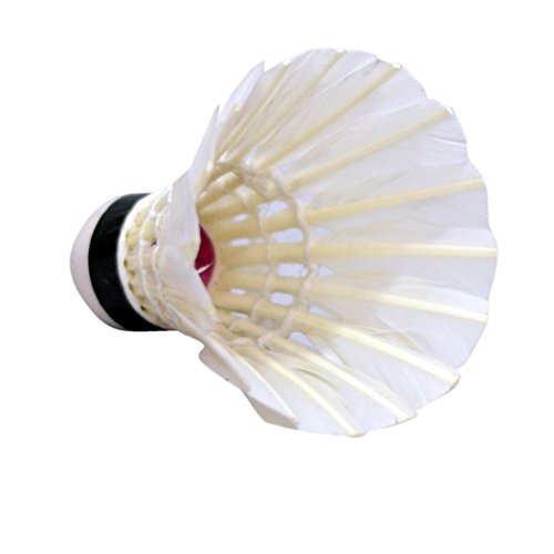 Chingari White Feather Cock, Pack Of 10