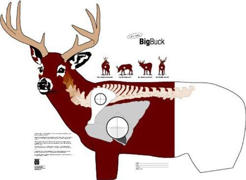photo regarding Deer Vitals Target Printable identified as Deer Paper Objectives: Ez Emphasis Deer Study Pack Focus 14 X