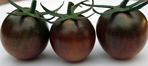 Black Cherry Tomato 25 Seeds