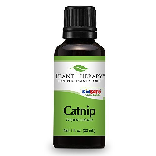 Catnip Essential Oil. 30 ml (1 oz). 100% Pure, Undiluted, Therapeutic Grade. by Plant Therapy Essential Oils