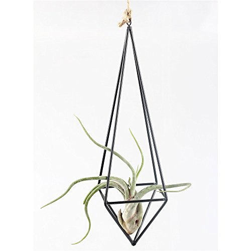rustic-style-freestanding-hanging-metal-tillandsia-air-plant-rack-holder-black-26cm-height-quadrilat