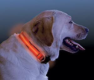"""Nite Dawg - LED Dog Collar - MEDIUM, 13-18"""" - ORANGE (NI-NND-03-19M) -"""