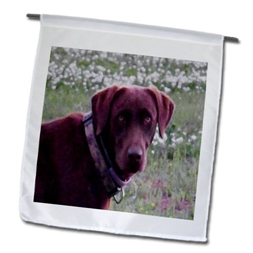 3dRose fl_14200_1 Chocolate Lab Oil Painting Garden Flag, 12 by 18-Inch