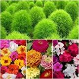 Summer Flower Seeds Combo - Kochia, Zinnia, Portuluca And Vinca - 4 Packets/40+ Seeds Each By Seedsccare India