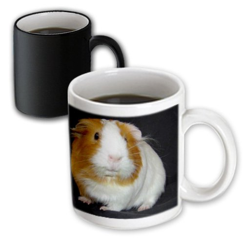 Mug_1061_3 Guinea Pig - Guinea Pig - Mugs - 11Oz Magic Transforming Mug