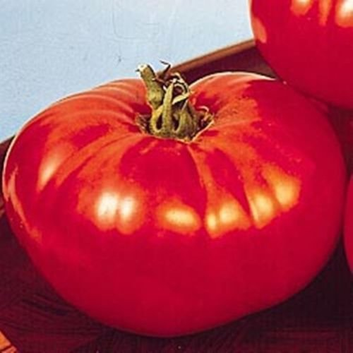 big-beef-tomato-25-seeds-early-large-fruits-heavy-yields-disease-resistant