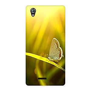 Ajay Enterprises Small One Buterfly Back Case Cover for Lava Iris 800