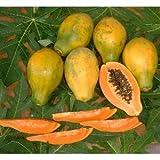 沖縄県産フルーツ 沖縄産フルーツパパイヤ約2kg ランキングお取り寄せ