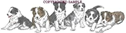 Border Collie - Puppies in a Row by Cindy Farmer